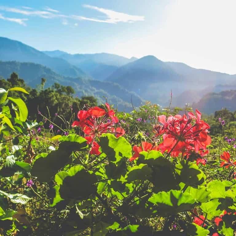 Plants scenery - Pure Life Adventure in Costa Rica