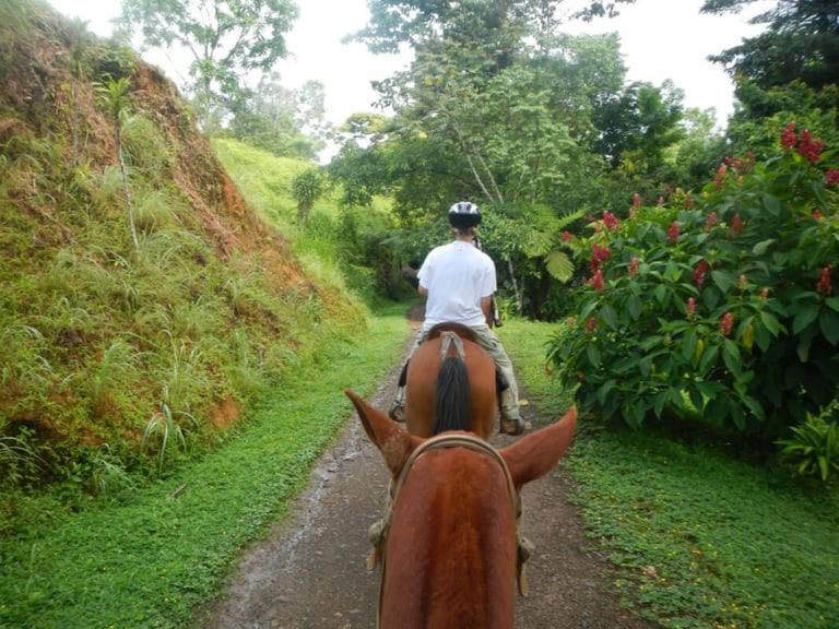 Horse Riding - Pure Life Adventure in Costa Rica