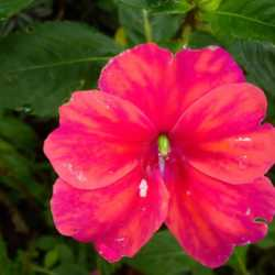 Flower view. Wilderness and Adventure Therapy for Young Adults. Pure Life in Costa Rica.