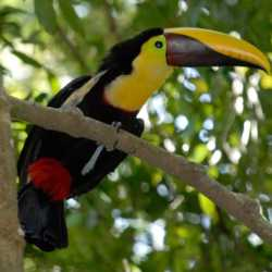 Bird view. Wilderness and Adventure Therapy for Young Adults. Pure Life in Costa Rica.