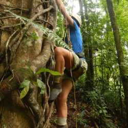 Student tree climbing. Wilderness and Adventure Therapy for Young Adults. Pure Life in Costa Rica.