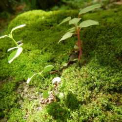 Plants growing. Wilderness and Adventure Therapy for Young Adults. Pure Life in Costa Rica.