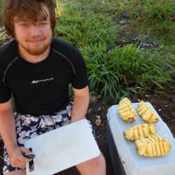 Student preparing pineapple. Wilderness and Adventure Therapy for Young Adults. Pure Life in Costa Rica.