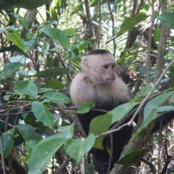 Monkey. Wilderness and Adventure Therapy for Young Adults. Pure Life in Costa Rica.