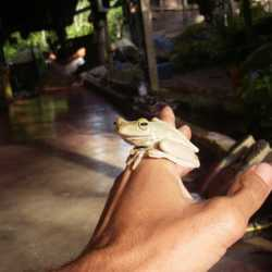 Student holding frog. Wilderness and Adventure Therapy for Young Adults. Pure Life in Costa Rica.