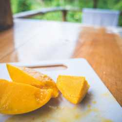 Mango. Wilderness and Adventure Therapy for Young Adults. Pure Life in Costa Rica.