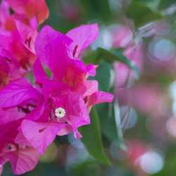 Flowers. Wilderness and Adventure Therapy for Young Adults. Pure Life in Costa Rica.