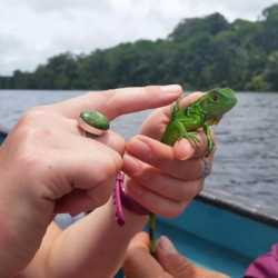 Student holding iguana. Wilderness and Adventure Therapy for Young Adults. Pure Life in Costa Rica.
