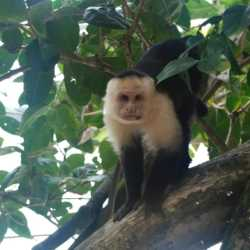 Monkey view. Wilderness and Adventure Therapy for Young Adults. Pure Life in Costa Rica.